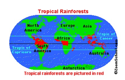 rainforest-map