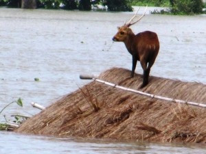 Kaziranga National Park Flooded