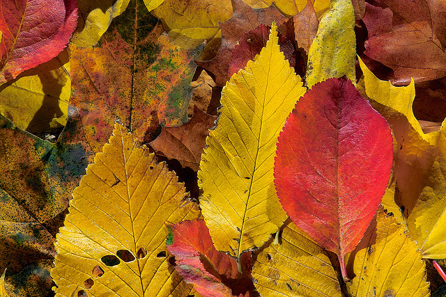 Why do plants change colors in autumn?