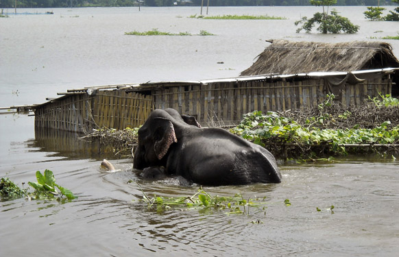Kazirangha National Park Flooded, Photocredit:zeenews