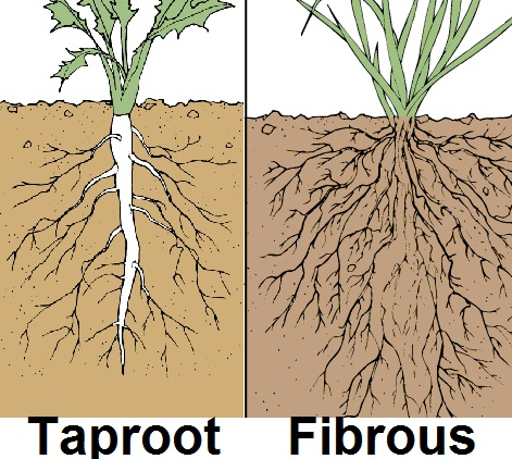 root-info-system