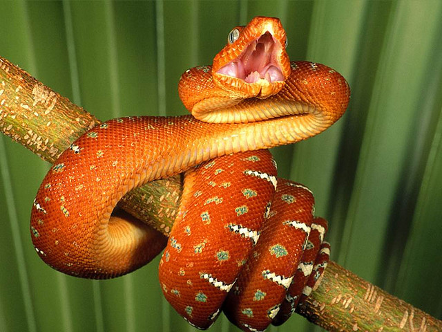 how do snakes get poison on their teeth facts for kids wild life