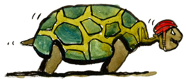 Turtles and Tortoises -  How Same but different!