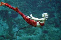 weeki wachee mermaids, Photo credit:Weeki Wachee Springs State Park,amusingplanet.com