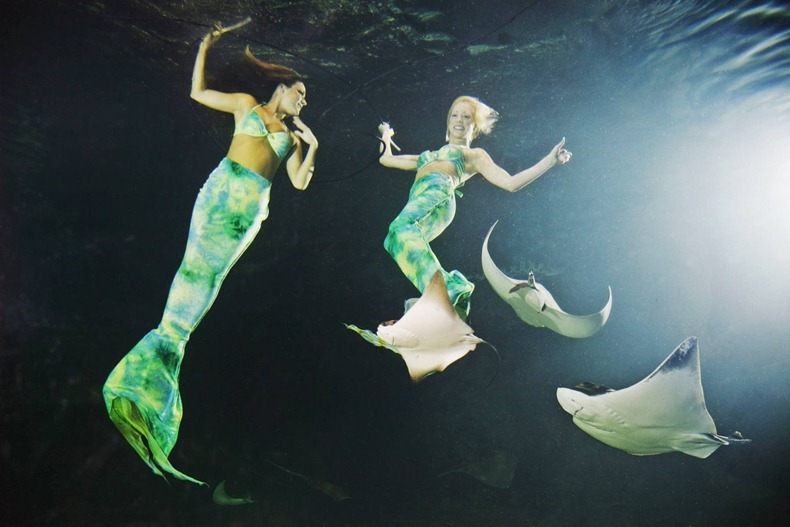 weeki wachee mermaids:Photo credit Ripley's Believe It Or Not!, amusingplanet.com