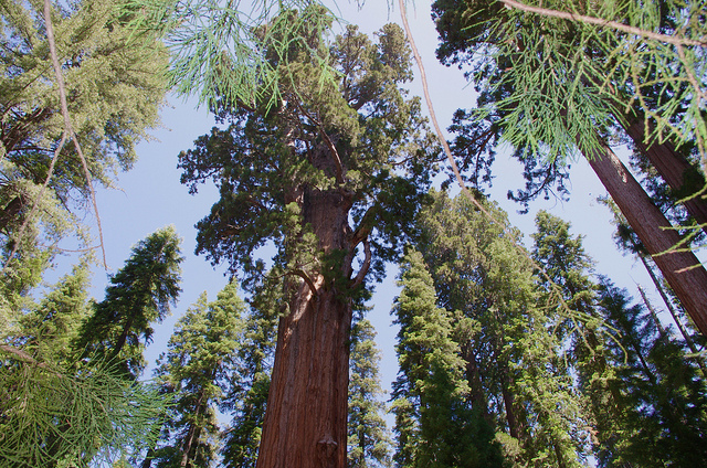 Giant general Sherman