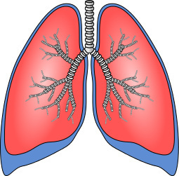 Lungs- respiratory system