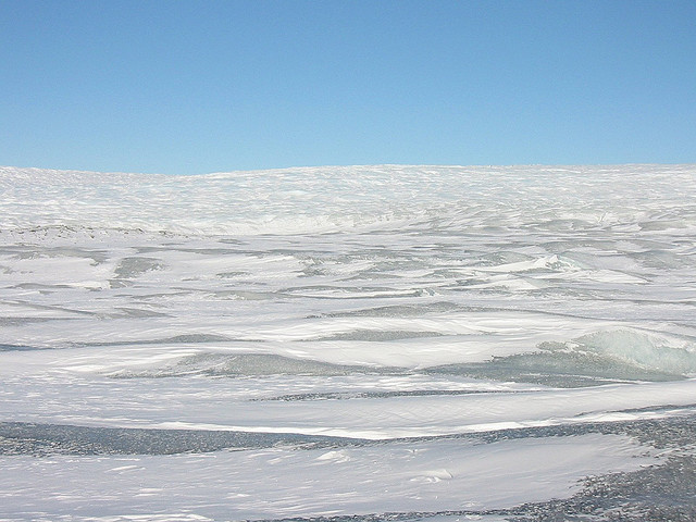 Antarctic is the largest desert in the world