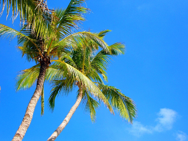 The ever giving coconut tree