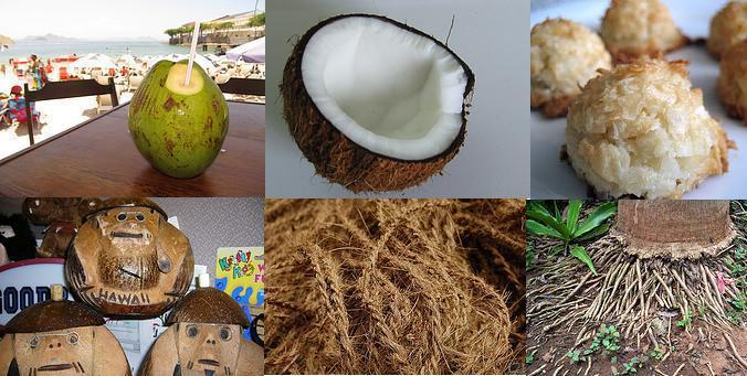 Coconut and its uses