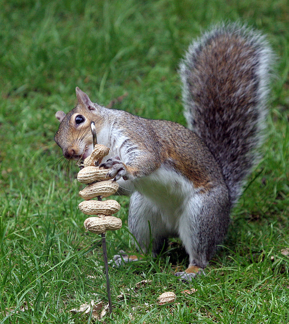 Squirrels are nuts about nuts