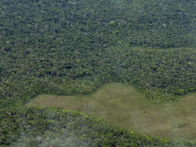 Deforestation drops down in Brazil Rainforests