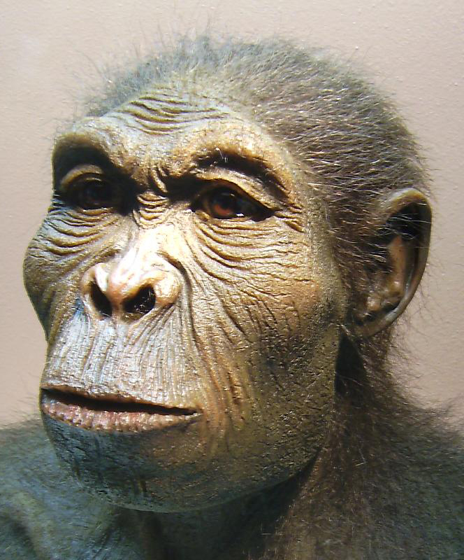 Homo Habilis - the first kind of human that walked upright