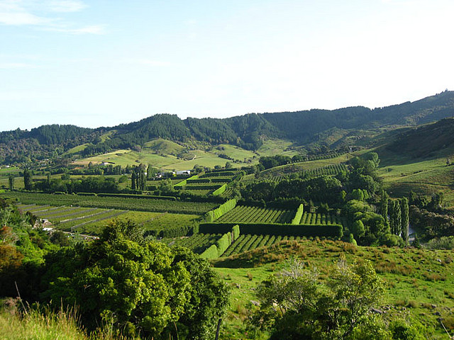 Beautiful countryside in New zealand