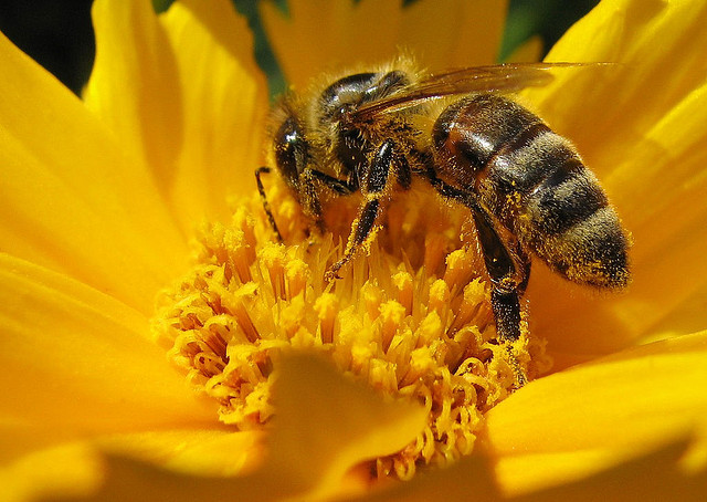 Restriction on Use of Bee Killing Pesticides in Europe