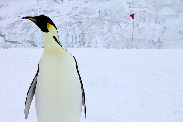 Emperor Penguin Happy Feet Jr dies