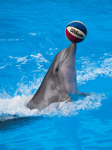 playful bottlenose dolphin