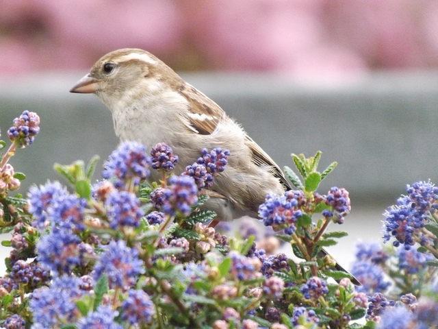Missing Sparrows