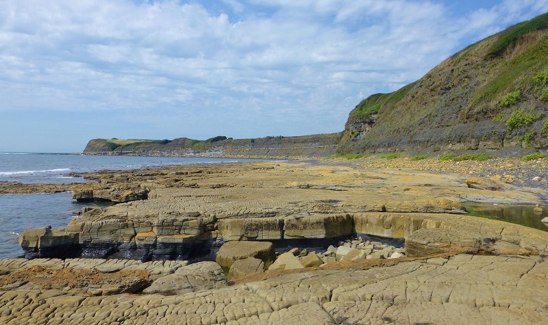 Fossil Forest at Dorset, a UNESCO designated World Heritage Site