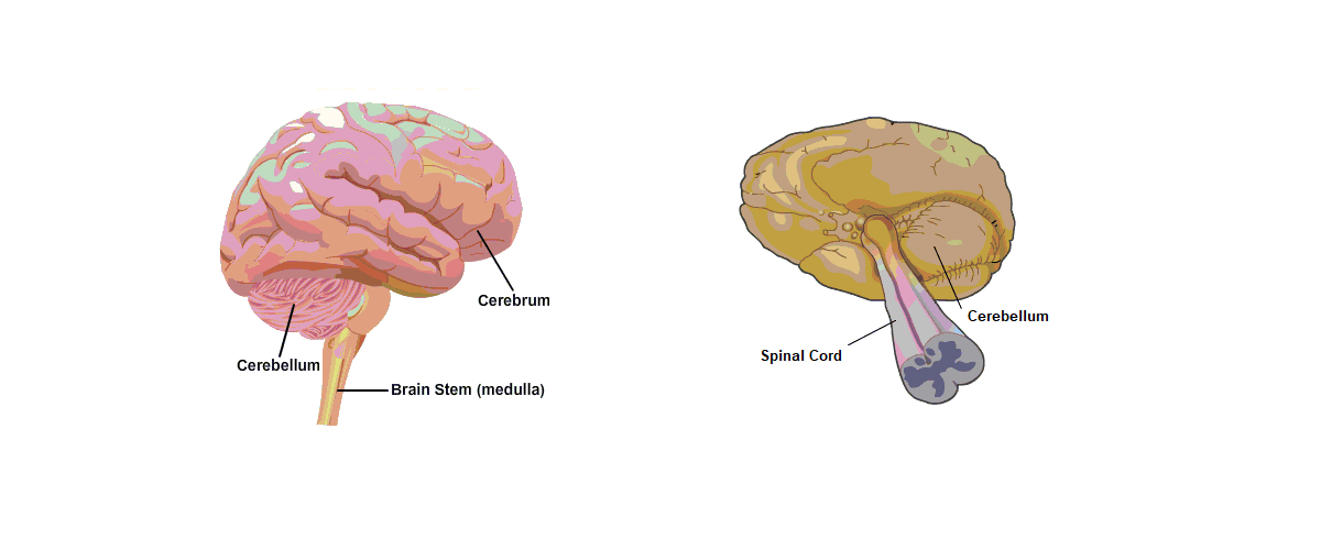 Parts of the human brain